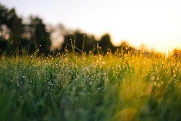 Entretien et coupe de pelouse